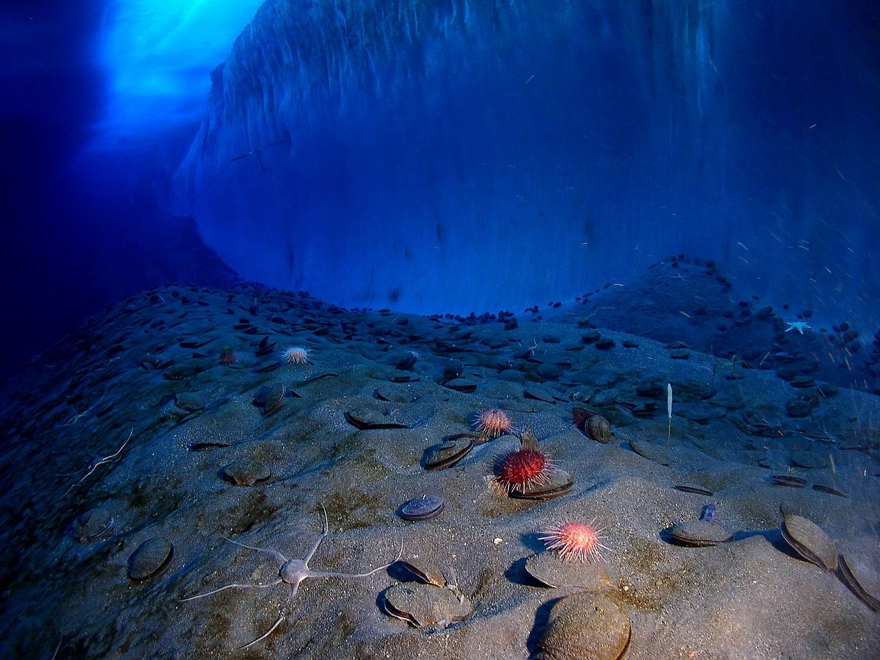 The Bottom Of An Iceberg, Antarctica