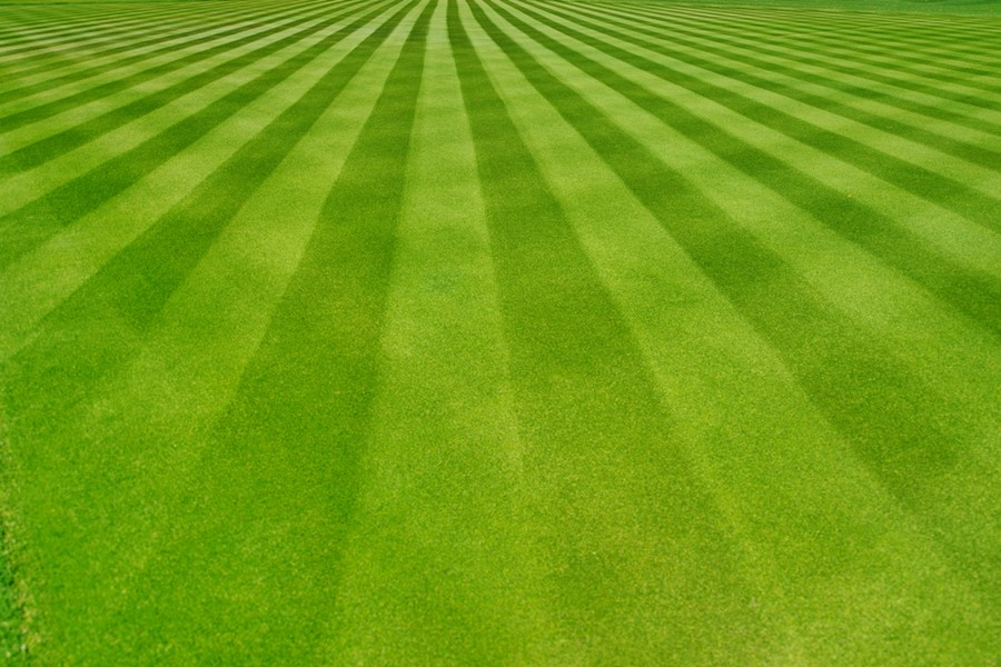 Beautiful Pattern Lawn Out of Grass
