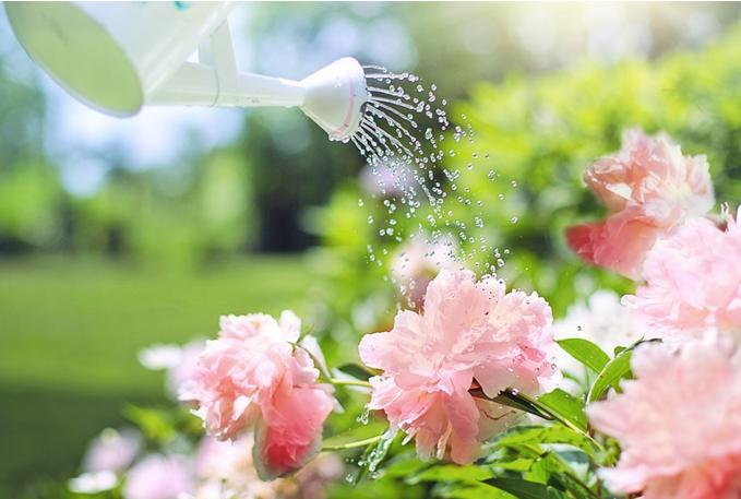 Water-gardening