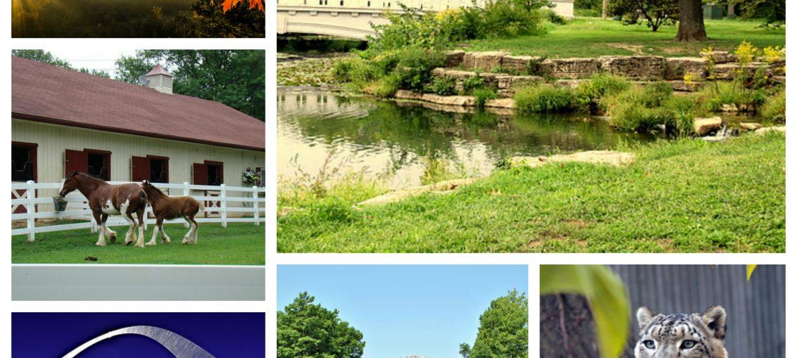 6 Best Outdoor Activities In St Louis
