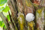 Golf-rules