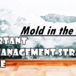 4 Important Mold Management Strategies at Home