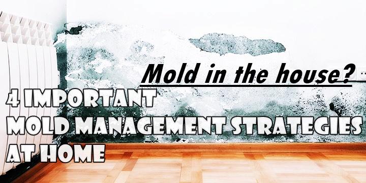 moldy-house