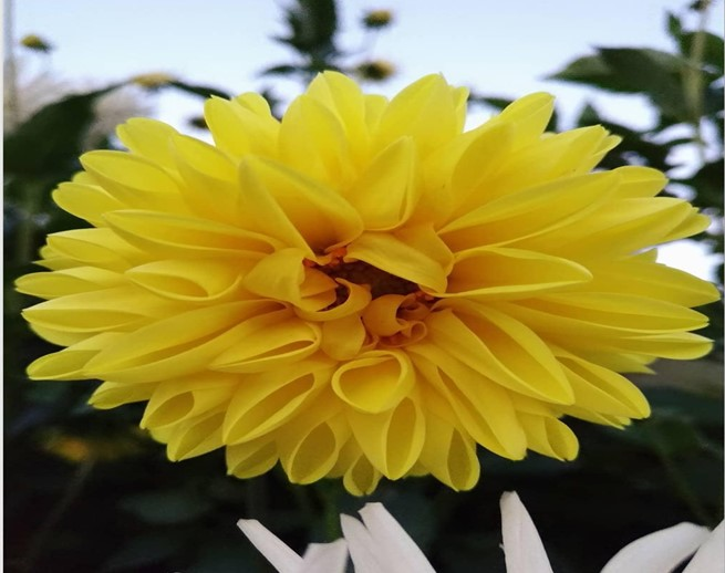 Types Of Yellow Flowers To Include In Your Garden Worthview